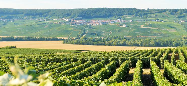 Vue sur la Montagne de Reims ©PNRMR