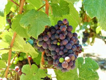 Vignoble d'hautvillers ©PNRMR