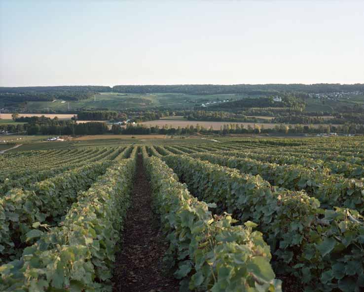 Damery, vallée de la Marne