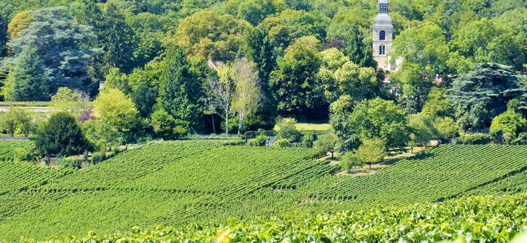 Forest of Hautvillers ©PNRMR