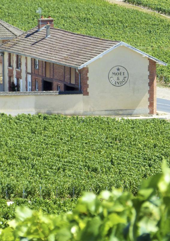Wine-making exploitation of Moët et Chandon ©PNRMR