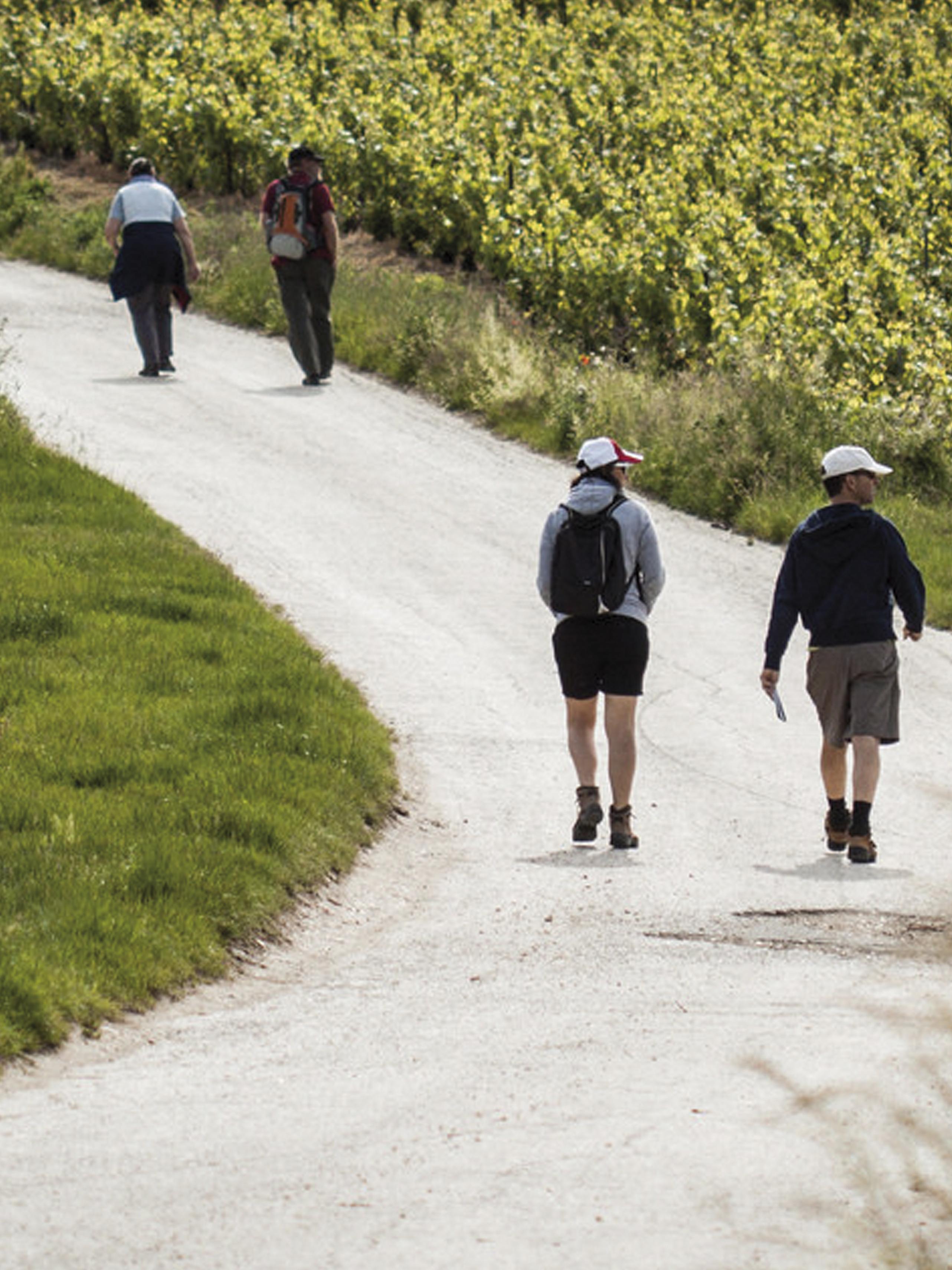 Randonneurs sur le sentier des loges de vigne à Trépail ©PNRMR