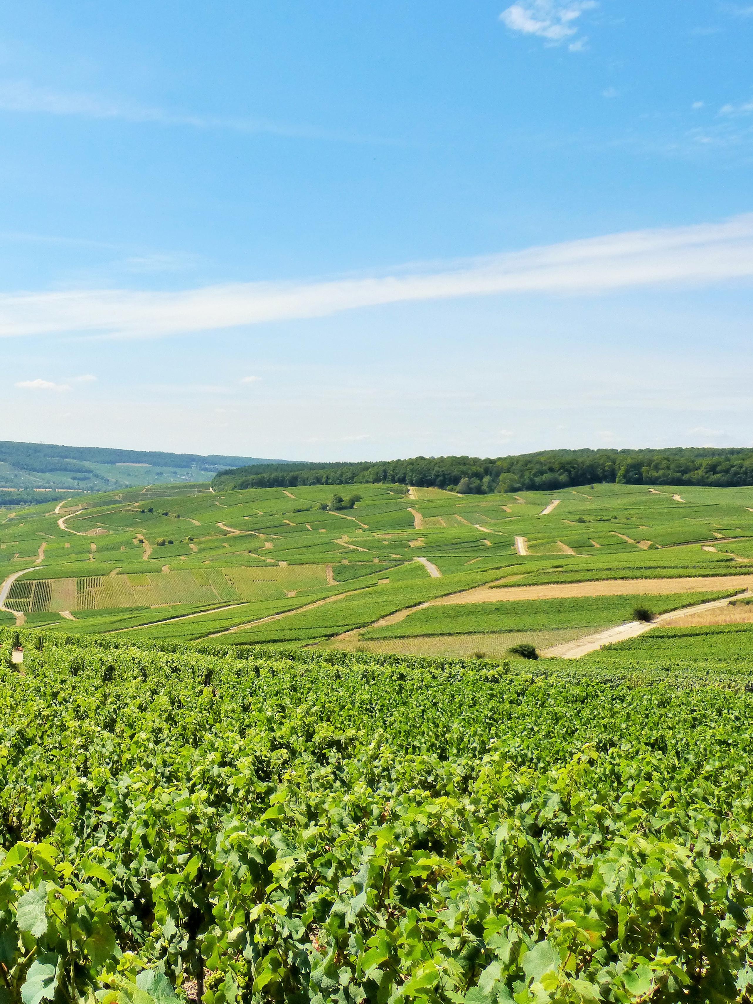 Coteaux viticoles de Cumières ©PNRMR